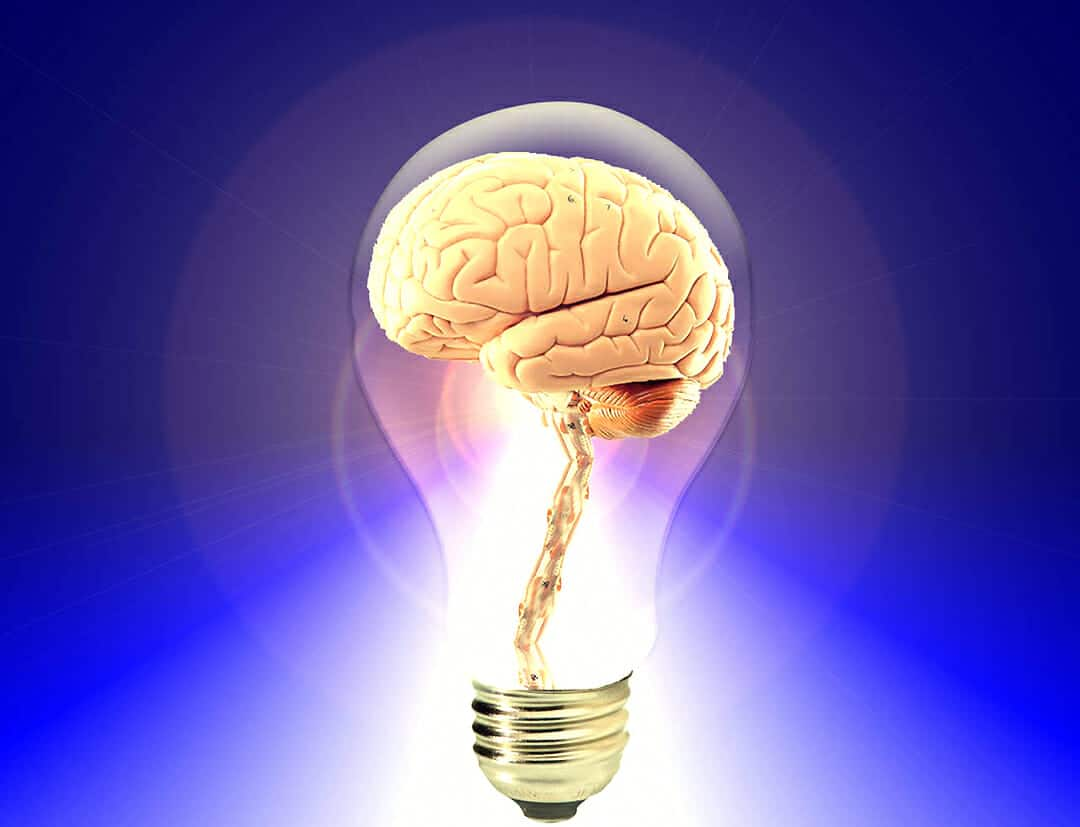 Know Your Brain: The Neocortex — The Light Upstairs