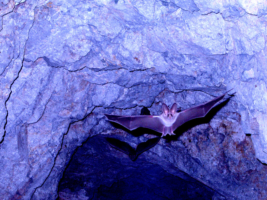 Stir Of Echoes: Learning Echolocation